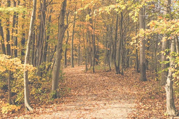 Wooded walking trail